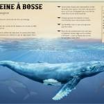 le livre extraordinaire de animaux des oceans 1