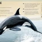 le livre extraordinaire de animaux des oceans 2