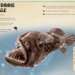 le livre extraordinaire de animaux des oceans 3